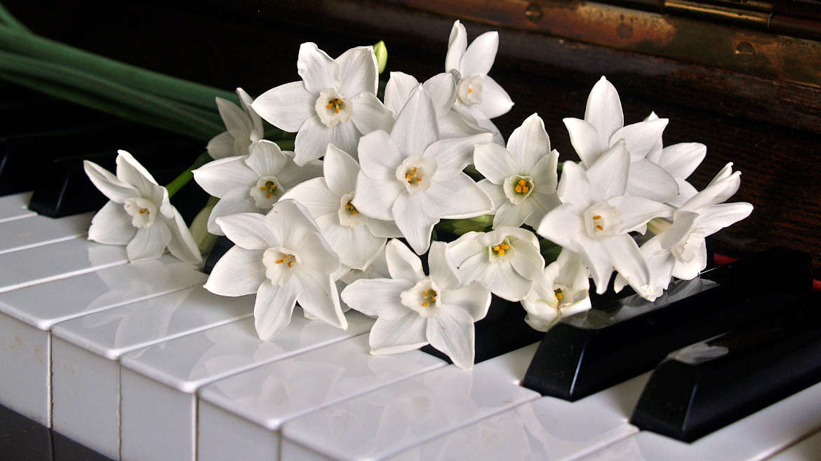 Orchids laying on piano keys